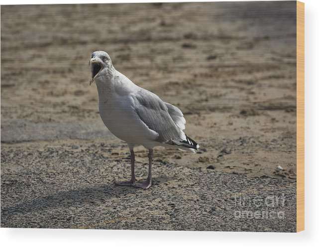 Bird Wood Print featuring the photograph Animated Seagull by Philip Pound