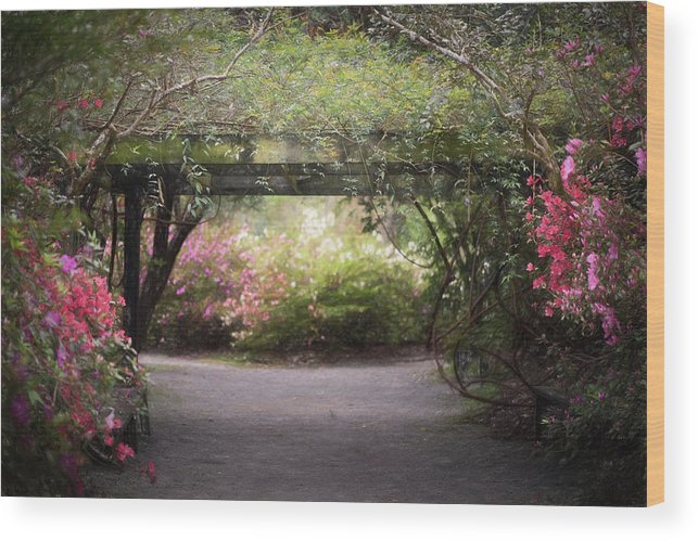 Lowcountry Springtime Wood Print featuring the photograph Arbor Walk by Kim Carpentier