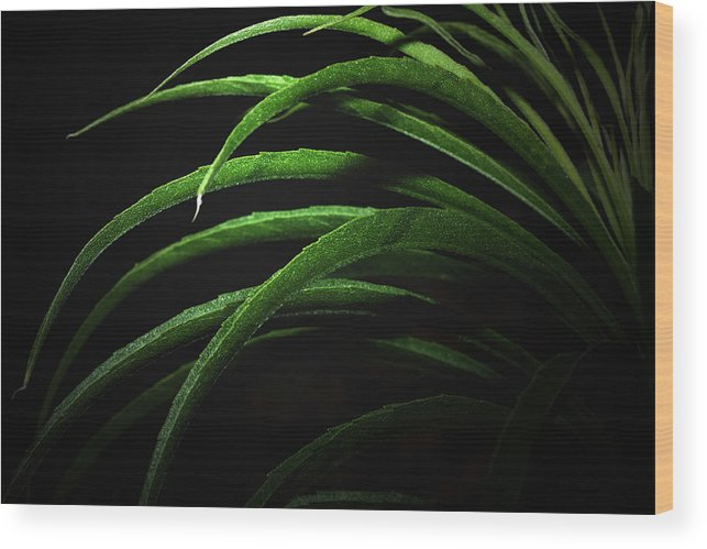 Green Wood Print featuring the photograph Arcs Of Green by Barbara White