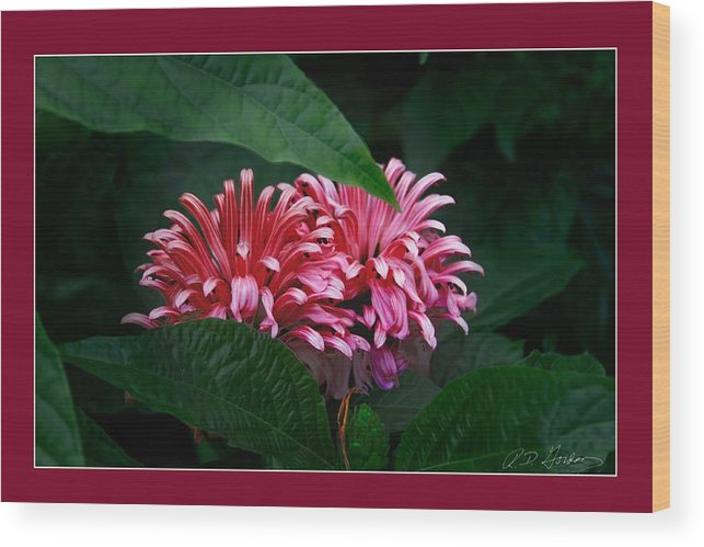 Flowers Wood Print featuring the photograph At Center by Richard Gordon