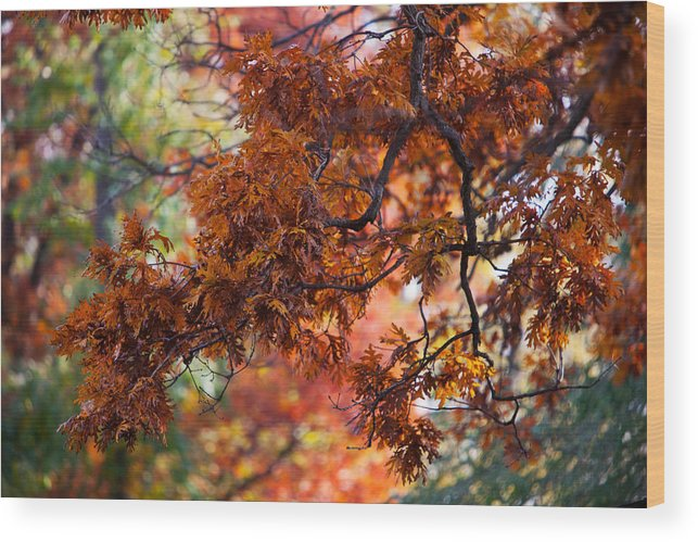 Nature Wood Print featuring the photograph Autumn Fury by Jane Melgaard