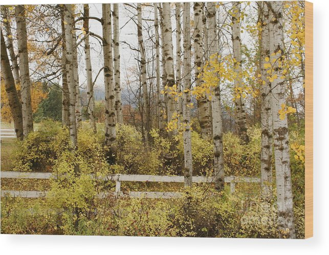 Grove Wood Print featuring the photograph Autumn Grove by Idaho Scenic Images Linda Lantzy