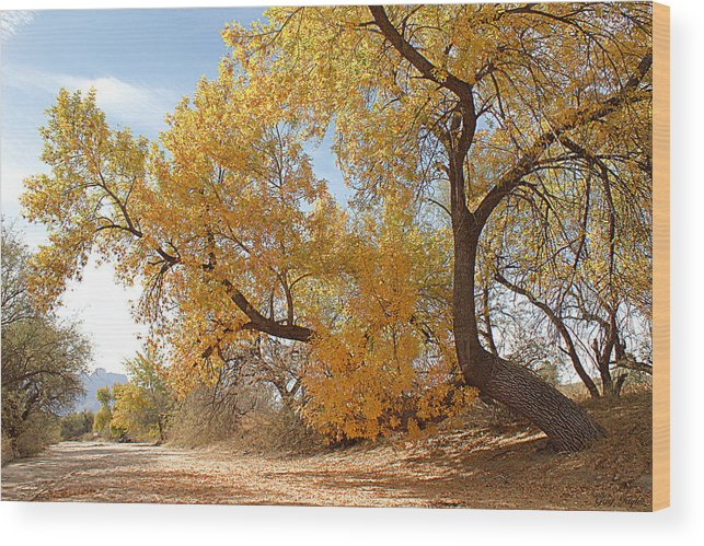 Autumn Wood Print featuring the photograph Autumn In Cdo Wash by Greg Taylor