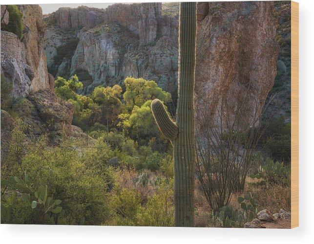 Arizona Wood Print featuring the photograph Autumn In The Sonoran by Saija Lehtonen