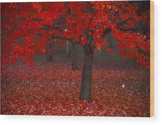 Red Wood Print featuring the photograph Autumn by Jane Melgaard