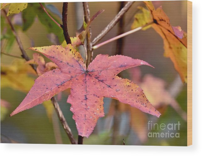 Autumn Wood Print featuring the photograph Autumn by Jeramey Lende