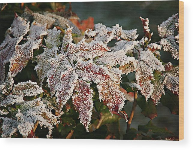 Fall Wood Print featuring the photograph Autumn Leaves In A Frozen Winter World by Christine Till