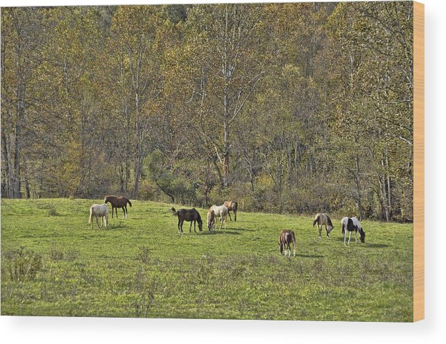 Animals Wood Print featuring the photograph Autumn Meadow by Jan Amiss Photography