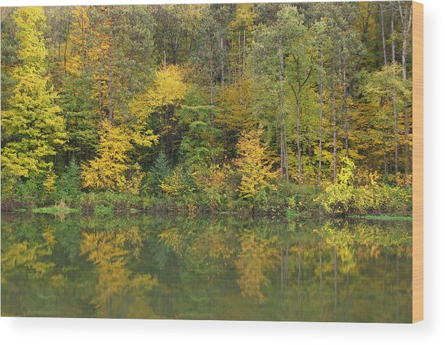 Trees Wood Print featuring the photograph Autumn Reflections by Brendon Bradley