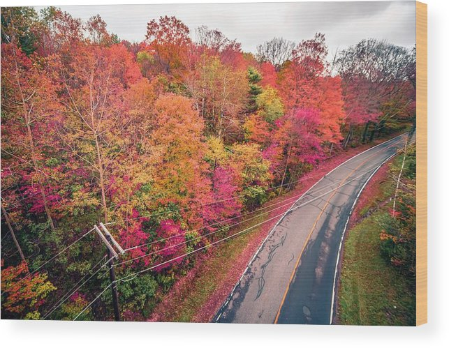 Park Wood Print featuring the photograph Autumn Season And Color Changing Leaves Season by Alex Grichenko