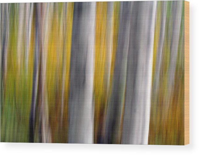 Tree Wood Print featuring the photograph Autumn Timber by Kelly Kellogg