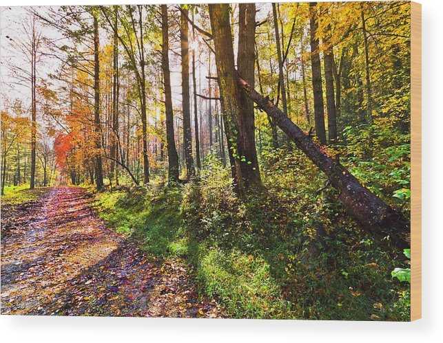 Appalachia Wood Print featuring the photograph Autumn Trail by Debra and Dave Vanderlaan
