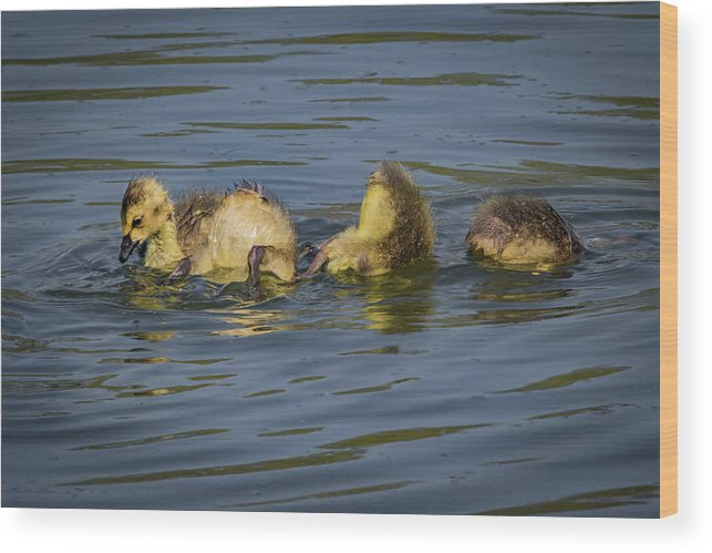 Siblings Wood Print featuring the photograph Baby Pool by Ray Congrove