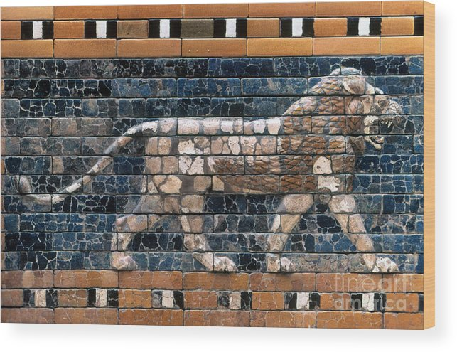 6th Century B.c. Wood Print featuring the photograph Babylon: Lion by Granger