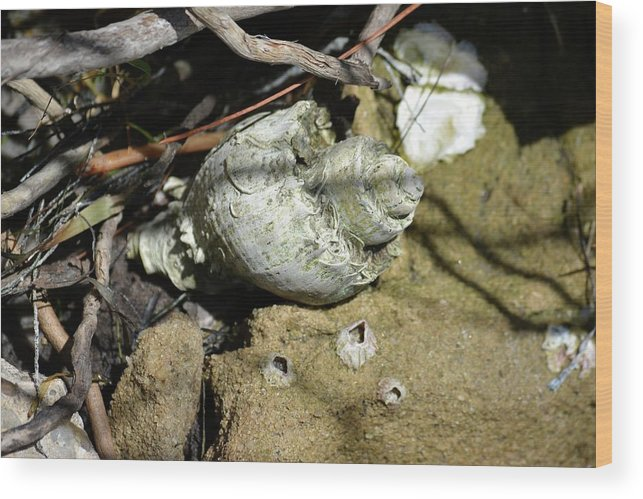 Sea Wood Print featuring the photograph Barnacles And Crabs by Tamra Lockard