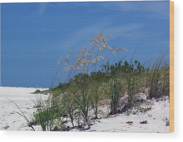 Beach Photography Wood Print featuring the photograph Beach Grass 3 by Evelyn Patrick