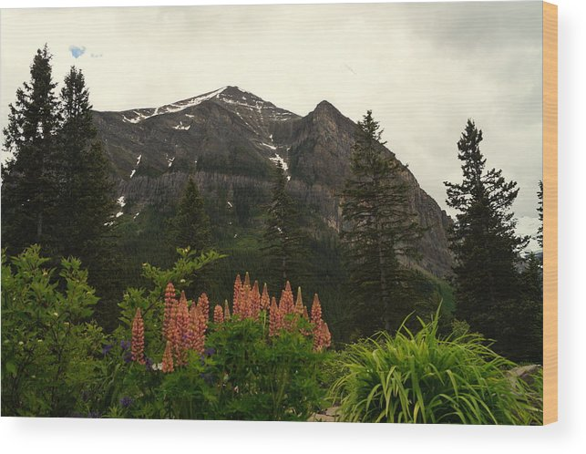 Banff National Park Wood Print featuring the photograph Beautiful Grounds by Beth Collins