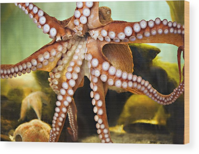 Octopus Wood Print featuring the photograph Beautiful Octopus by Marilyn Hunt