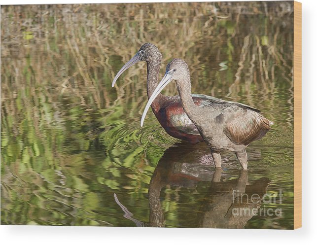 Cutts Nature Photography Wood Print featuring the photograph Beautiful Pair by David Cutts