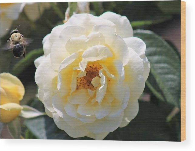 Flowers Wood Print featuring the photograph Bee My Rose by James Haney