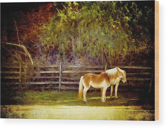Animals Wood Print featuring the photograph Belgian Pair by Jan Amiss Photography