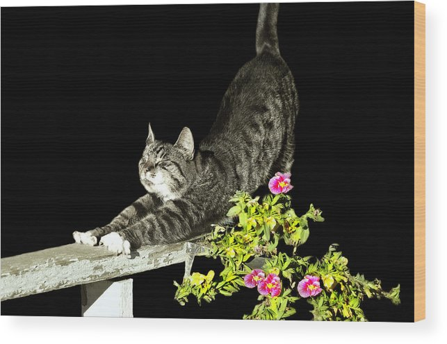 Cat Wood Print featuring the photograph Bend And Stretch by Diana Angstadt