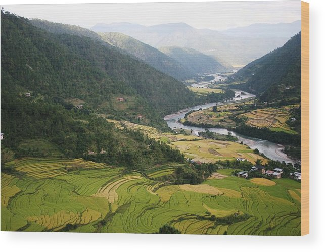 Scenery River Winding \rice Fields\ Lush Green View Bhutan \namgyal Choling\ Wood Print featuring the photograph Bhutan Rice Fields by Linda Russell