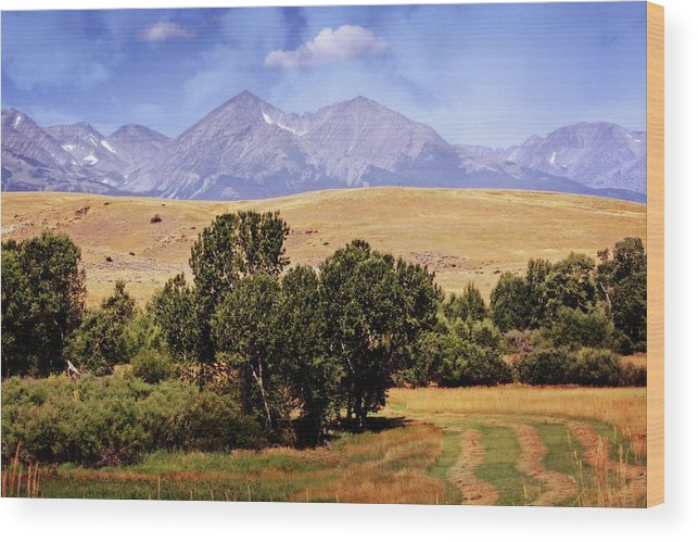 Montana Wood Print featuring the photograph Big Timber Canyon 2 by Marty Koch