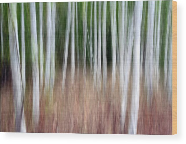 Birch Wood Print featuring the photograph Birch Grove Impressions by Kelly Kellogg