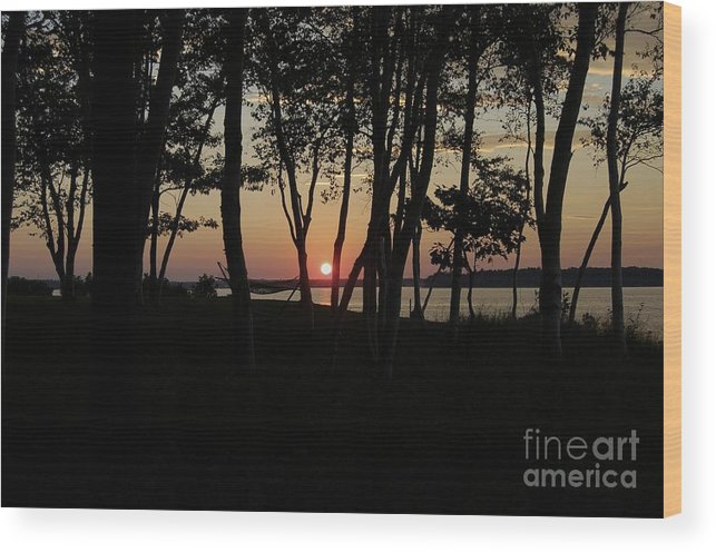Birch Wood Print featuring the photograph Birches Watch The Sunset by Faith Harron Boudreau