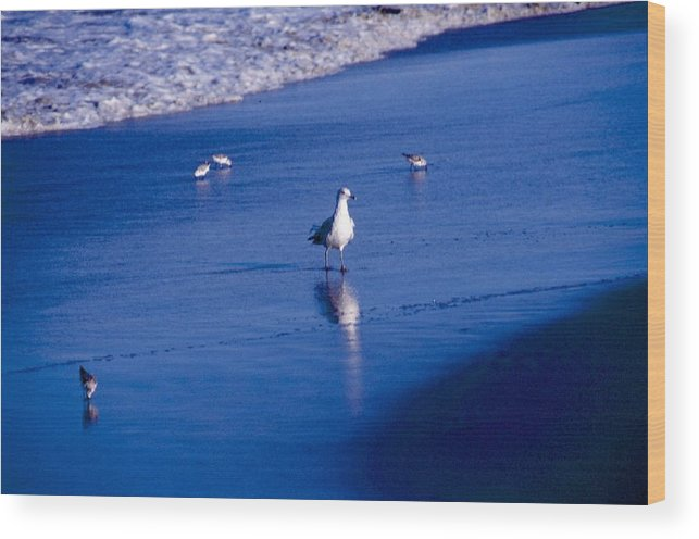 Ocean Wood Print featuring the photograph Bird At Ocean's Tide by George Ferrell
