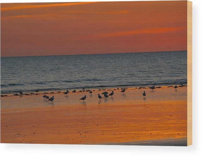 Seascape Wood Print featuring the photograph Birds Amongst The Glow by Veron Miller