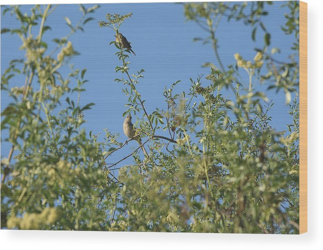 Linda Brody Wood Print featuring the photograph Birds At Peters Canyon by Linda Brody