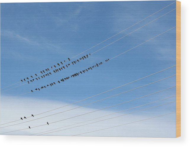 Birds Wood Print featuring the photograph Birds On Wires by Ric Bascobert