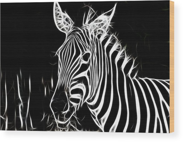 Zebra Wood Print featuring the photograph Black And White by Douglas Barnard