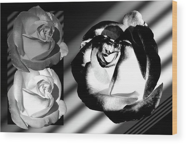 Roses Wood Print featuring the photograph Black And White Roses by Phyllis Denton