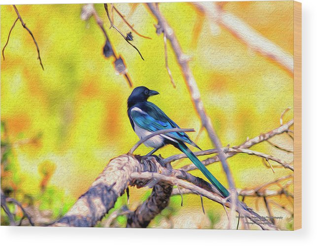 American Magpie Wood Print featuring the digital art Black-billed Magpie by Christopher Eng-Wong