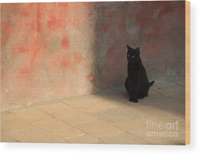 Cats Wood Print featuring the photograph Black Cat On Burano by Michael Henderson