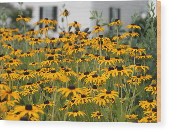 Flowers Wood Print featuring the photograph Black Eyed Susans by Karen Fowler