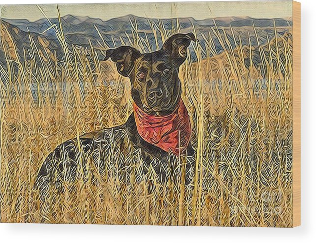 Animal Wood Print featuring the photograph Black Lab In Grassy Field by Tarisa Smith