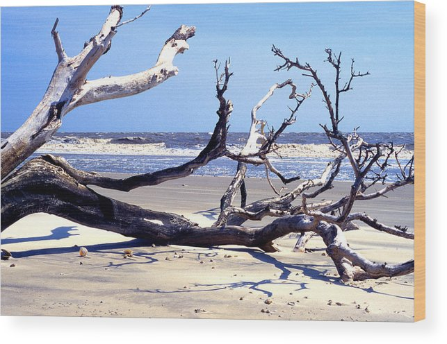 Kayak Wood Print featuring the photograph Blackbeard Island Beach by Thomas R Fletcher