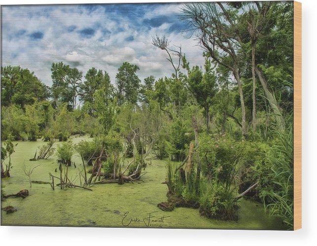 Blackwater Wood Print featuring the photograph Blackwater Swamp by Erika Fawcett