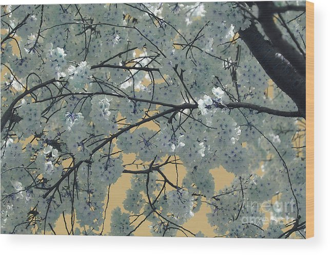 Blossoms Wood Print featuring the photograph Blossoms by Katherine Morgan