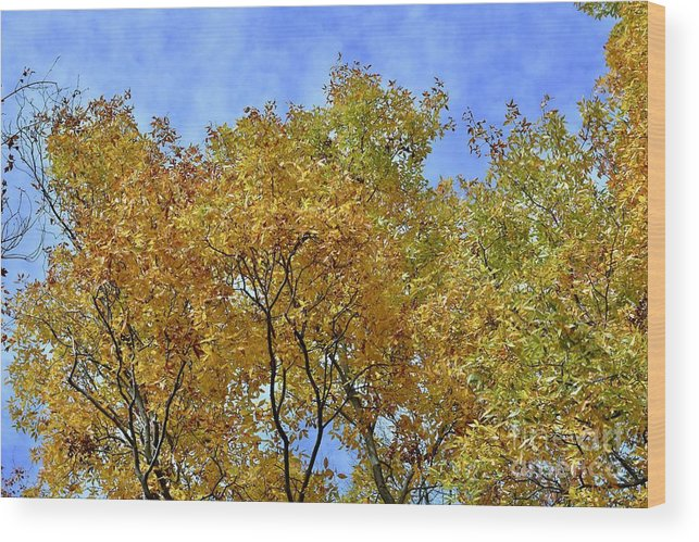Autumn Wood Print featuring the photograph Blue Autumn Sky by Jeramey Lende
