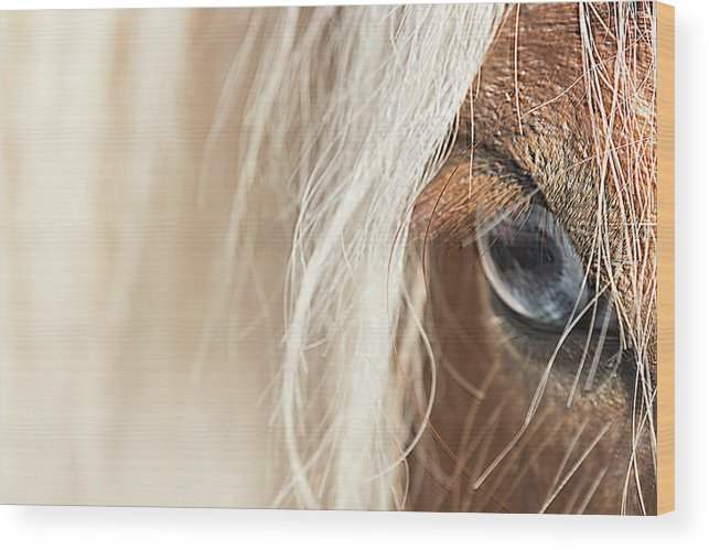 Horse Wood Print featuring the photograph Blue Eyed Horse by Kathryn Bell