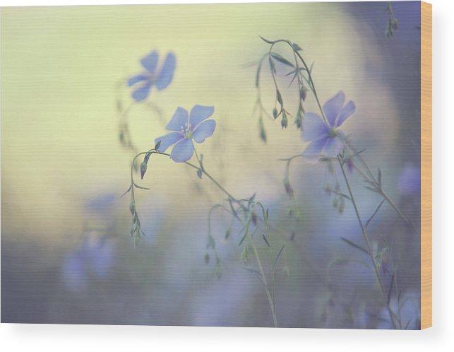 Jenny Rainbow Fine Art Photography Wood Print featuring the photograph Blue Flex Flower. Nostalgic by Jenny Rainbow