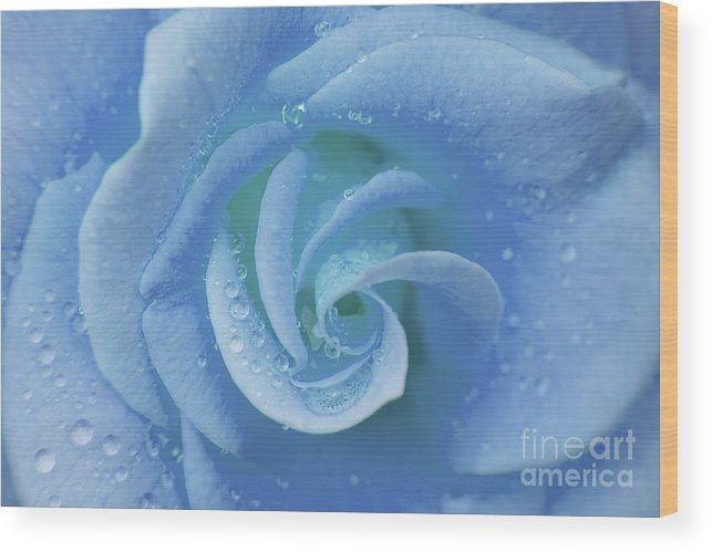 Flower Wood Print featuring the photograph Blue Rose by Julia Hiebaum