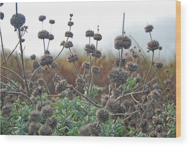Seed Wood Print featuring the photograph Botanical Towers by Jean Booth