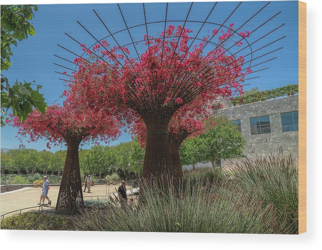 Getty Center Wood Print featuring the photograph Bougainvilleas Tree Scultures by Michelle Choi