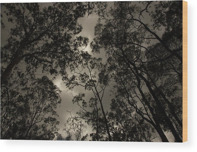 Black And White Wood Print featuring the photograph Brisbane Rain Forest by Lisa Ross